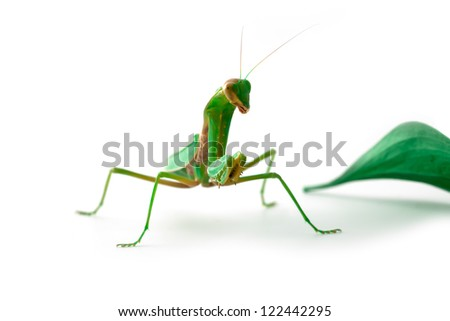 Mantis looking us with one eye