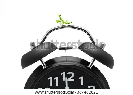 Mantis on Black clock