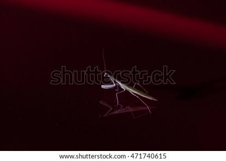Mantis sitting in the light of a lantern on a smooth red surface at night