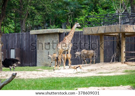 many animal in zoo - stock photo