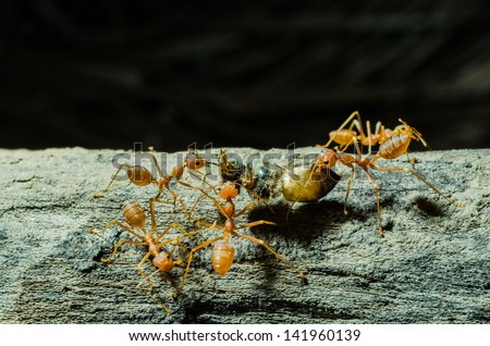Many ants working Together - stock photo