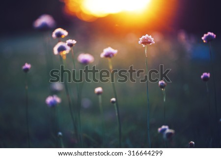 many beautiful meadow wild flowers in field on sunset background. Sunny outdoor bright evening colouful autumn photo - stock photo