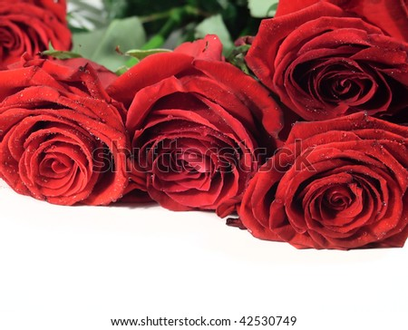 Many beautiful red roses