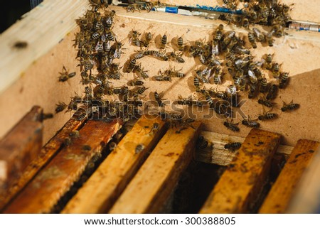 Many bees on the side of beehive with wooden frames of honeycomb inside, on sunny day close up - stock photo