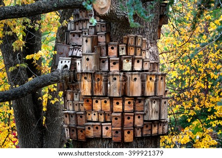 Many Birdhouses on a huge tree in the forest/Birdhouse/Many Birdhouses to accommodate everybody, built on a huge tree in the forest. Full frame. - stock photo