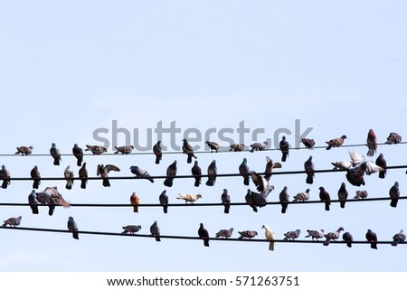 Many birds are resting on the cable.