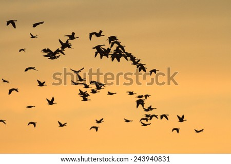 many birds in their natural habitat, nature series - stock photo