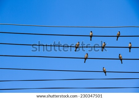 Many birds on a wire in the shape of a heart - stock photo