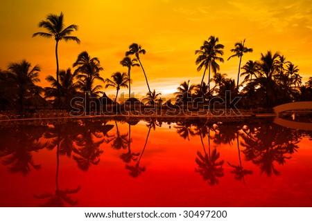 Many black palm on a night beach orange night near pool - stock photo