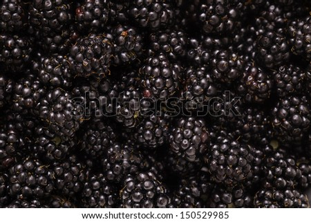 Many blackberries - stock photo