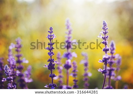 many blue flowers in flowerbed in garden. Sunny fresh summer bright colorful photo. Nature background - stock photo