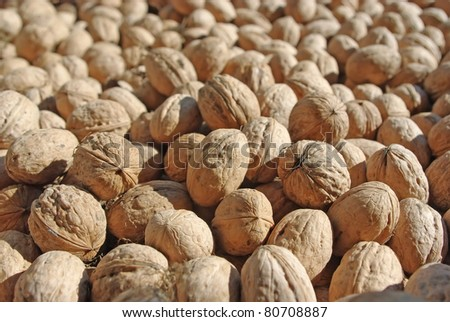 Many brown walnuts in sunny day - stock photo