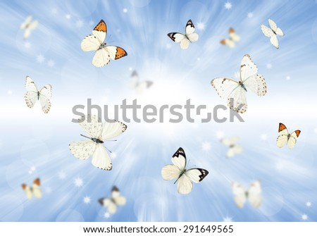 Many butterflies flying over a green meadow. Summer background.