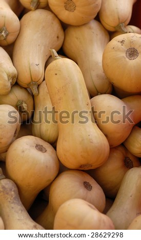 Many Butternut squash for sale at an outdoor farmers market. - stock photo