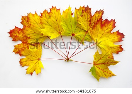 Many colorful autumn leaves isolated on white - stock photo