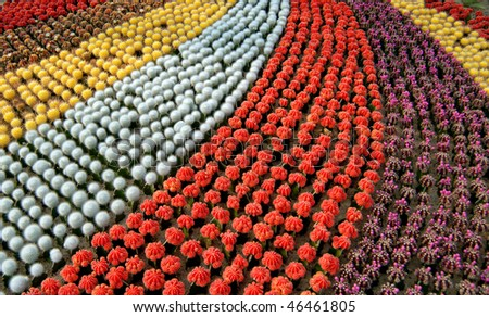 many colors of cactus arranged together, just like rainbow.