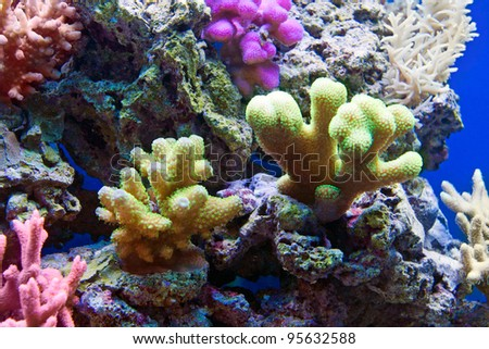 Many corals in aquarium