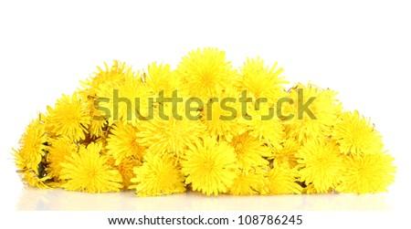 Many dandelion flowers isolated on white - stock photo