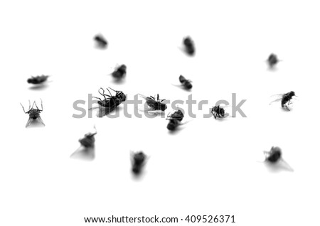 Many dead flies isolated on white background - stock photo