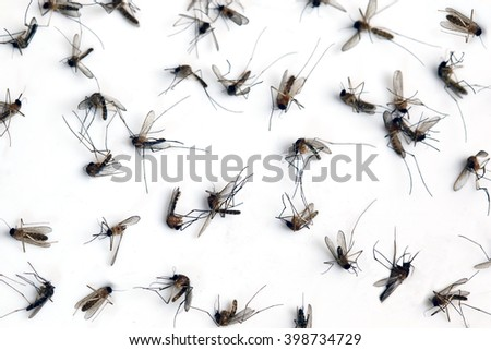 Many dead mosquitoes isolated on white background.