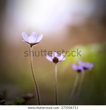 many delicate purple wildflowers on green nature background - stock photo