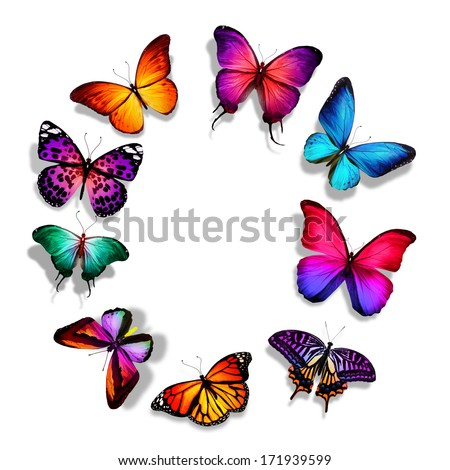 Many Different Butterflies Flying Isolated On Stock ...