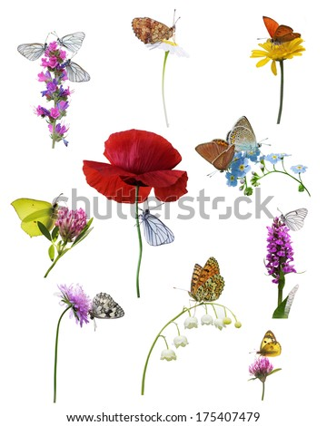 Many different butterflies on wildflowers, isolated on white background  - stock photo