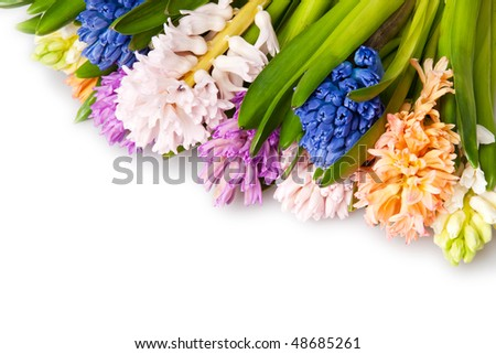 many  different color hyacinth, flowers - stock photo