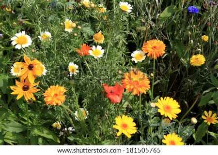 many different flowers on a summer meadow - stock photo