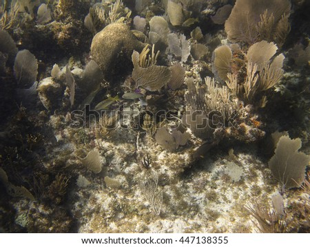 many different species of fish swimming in a a coral reef - stock photo