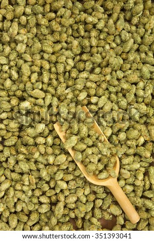 many dried hops for beer and brewery with wooden shovel - stock photo