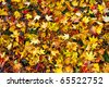 Many dry colorful autumnal leaves covering the ground - stock photo