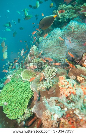 Many Fish Swim with Beautiful Coral in an Underwater Portrait - stock photo