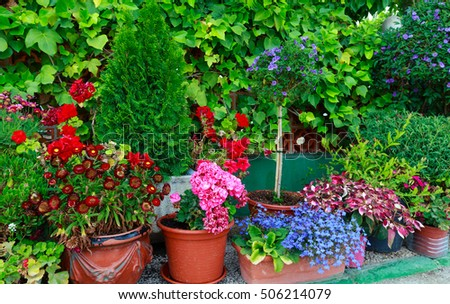 Many flowerpots with colorful flowers.