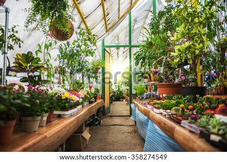 many flowers at garden in sunny day - stock photo