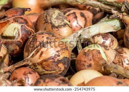 Many Fresh onions - stock photo