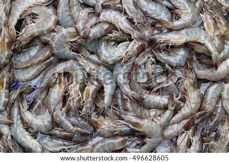 Many fresh shrimp just catch from fishery ship to sell at seafood market.