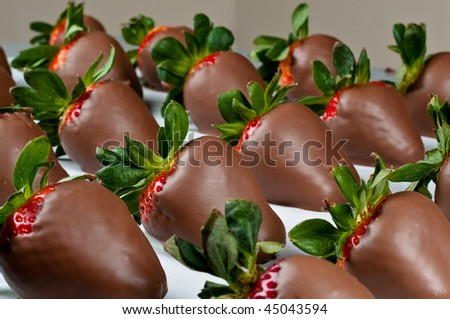 Many hand dipped chocolate covered strawberries in a row with large depth of field - stock photo