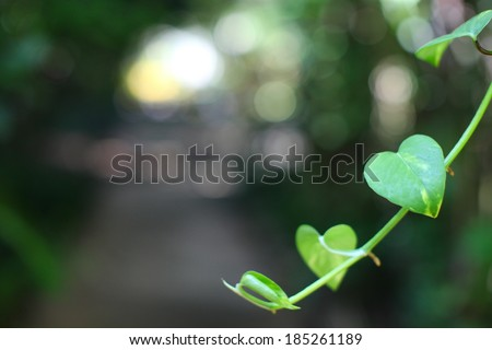 many leaf of the tree in the form of heart - stock photo