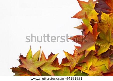 Many leaves on a white background make a frame - stock photo