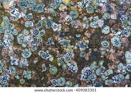 Many Lichen Covering Old Stone for Your Background - stock photo