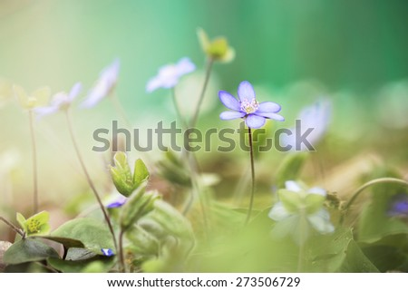 many lilac soft flowers in grass. Nature background - stock photo