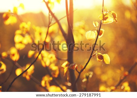 many little yellow leaves in sunny forest in morning. Nature autumn background