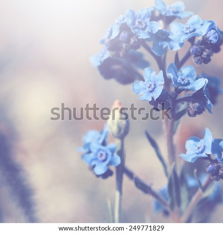 many meadow blue flowers at field in morning. Nature soft spring background - stock photo