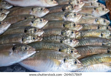 Many of fresh fish seafood in indoor market background - stock photo