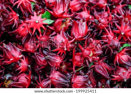 Many of Roselle fruits Hibiscus sabdariffa  - stock photo