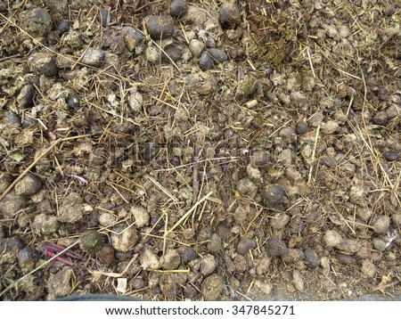 Many of the old horse manure, which is converted into the soil. - stock photo