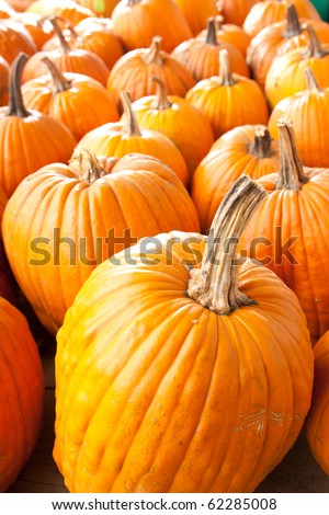 Many orange halloween pumpkins of different shapes and sizes.