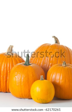 Many orange halloween pumpkins of different shapes and sizes isolated on white background.