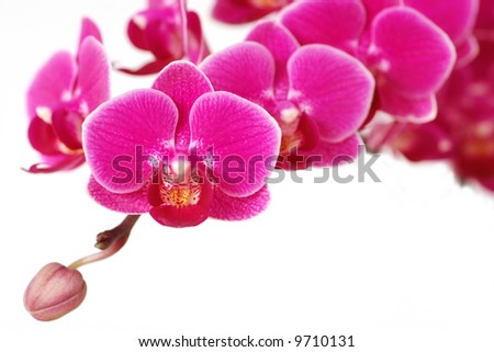 Many orchid flowers - stock photo